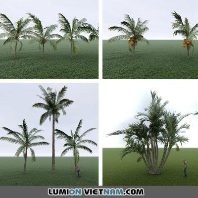 SKETCHUP TREE – VRAY READY – Lumion Việt Nam