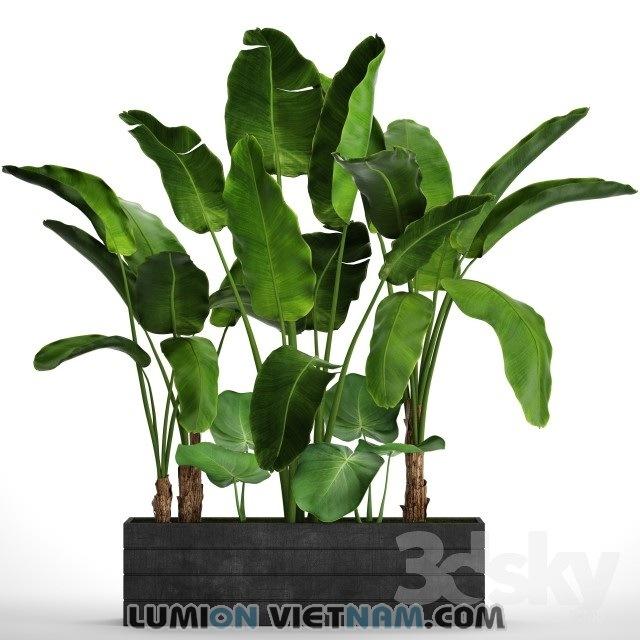 plant- 3dsmax model free download